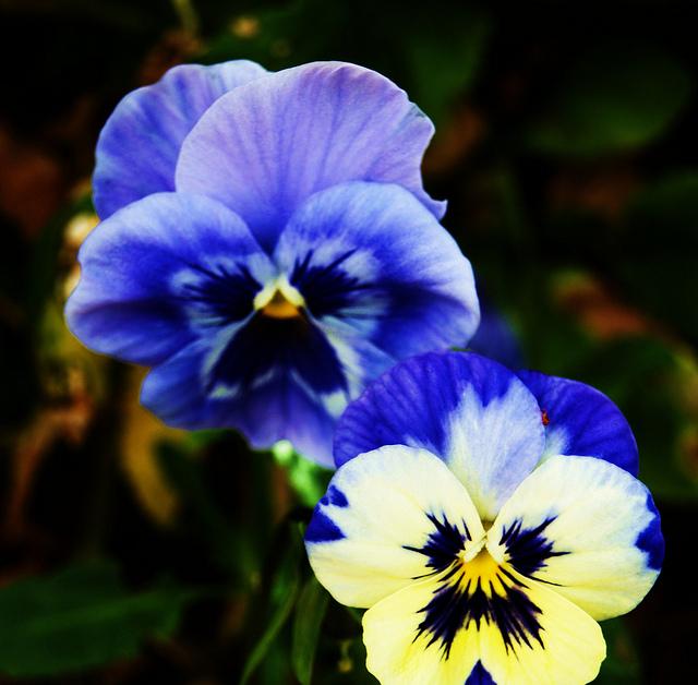 Pretty little flowers in Dunedin, New Zealand.